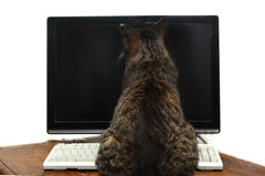 Computer cat Royalty Free Stock Photography