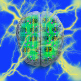 Computer Circuit Brain. Computer circuit board combined with a human brain stock illustration