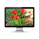 Computer display with tulips flowers on the screen Royalty Free Stock Photos