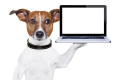 Computer dog Royalty Free Stock Image