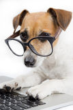 Computer dog. Clever dog with glasses uses computer Royalty Free Stock Photography