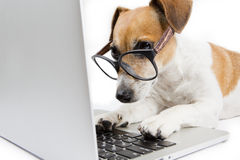 Computer dog. Clever dog with glasses uses computer