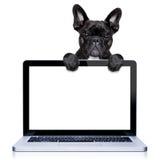 Computer dog royalty free stock image