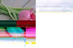 Computer error when editing a photo. Tulips and hearts. Past love. Trendy Glitch effect.  stock photography