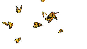 Computer generated butterflies stock footage