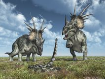 Dinosaur Styracosaurus and giant snake Titanoboa royalty free stock photos