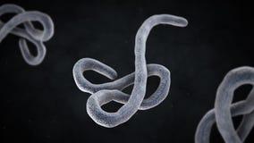 3D illustration of ebola virus stock illustration