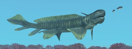 Prehistoric shark Orthacanthus. Computer generated 3D illustration with the prehistoric shark Orthacanthus Royalty Free Stock Photos