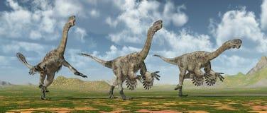Theropod dinosaur Citipati Stock Image