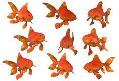 An illustration image of nine goldfishes royalty free stock photo