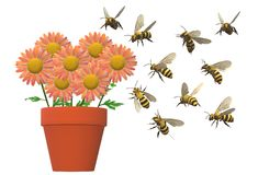 A pot of daisies attracted by a swarm of bees stock image