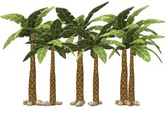 Some palm frees growing in a cluster. A computer generated illustration image of some palm frees growing tall in a cluster against a white backdrop vector illustration