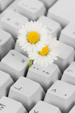 Computer Keyboard and flower Stock Photo