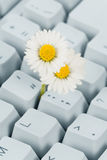 Computer Keyboard and flower Stock Images