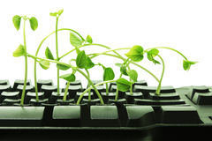 Computer Keyboard with Snow Pea Sprouts Royalty Free Stock Image