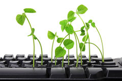 Computer Keyboard with Sprouts Royalty Free Stock Photos