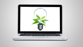 Computer laptop and plant growing inside light bulb isolate. On gray background Stock Photo