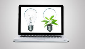 Computer laptop and plant growing inside light bulb isolate. On gray background Royalty Free Stock Photos