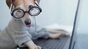 computer laptop using by funny nerd dog in jumper.