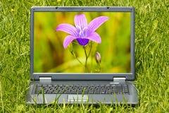 Computer met mooie bloem op het scherm royalty-vrije stock afbeelding