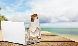 Computer Monkey Royalty Free Stock Image
