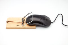 Computer mouse. Back computer mouse and mousetrap isolated on white background stock image