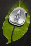 Computer mouse on a leaf Royalty Free Stock Images