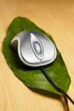 Computer mouse on a leaf Royalty Free Stock Photo