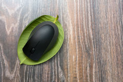 Computer mouse on a leaf plants. Computer mouse on a piece of plant on wooden background Stock Image