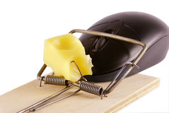 Computer mouse and mousetrap Royalty Free Stock Photo