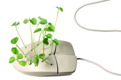 Computer Mouse with Sprouts Stock Photography