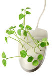 Computer Mouse with Sprouts Royalty Free Stock Images