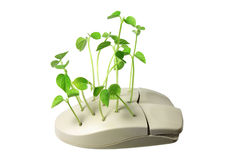 Computer Mouse with Sprouts Stock Photos