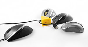 Computer mouses. Eating yelow cheese royalty free stock image