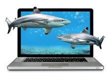 Computer portatile con gli squali Fotografia Stock Libera da Diritti