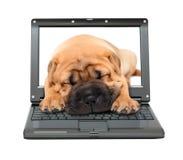 Computer portatile con il cane di cucciolo di sonno Immagine Stock Libera da Diritti