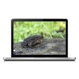 Computer portatile con la rana sullo schermo Immagine Stock Libera da Diritti