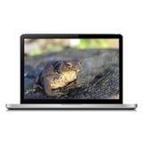 Computer portatile moderno con la rana sullo schermo Immagine Stock Libera da Diritti