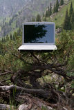 Computer portatile su un albero immagini stock