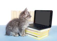 Computer savy gray tabby kitten royalty free stock photos