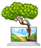 Computer screen with birds on tree Stock Images