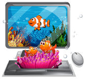 Computer screen with swimming  Royalty Free Stock Image