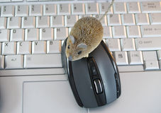 Computer and two mouse Stock Images