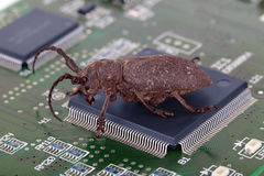 Computer virus. Terrible beetle climbing on the integrated circuit, the concept of network virus code Stock Image