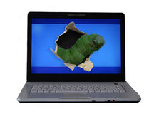 Computer worm. Large worm comming out of the screen of a laptop Stock Photo