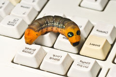 Computer worm. Stock Photography