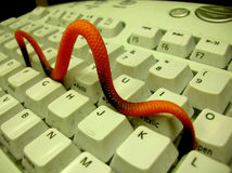 Computer Worm. Image of a computer worm attacking a pc keyboard Stock Photography