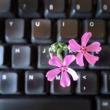 Computertastatur mit Frühlingsblume Stockbild