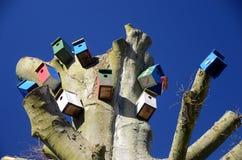 Comuna do ` s do pássaro em uma árvore Fotos de Stock Royalty Free