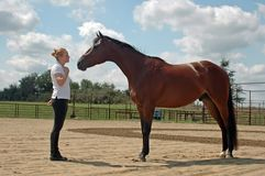 Comunicación con el caballo Imágenes de archivo libres de regalías